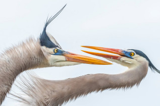 Audubon Photography Awards 2019 - wyniki