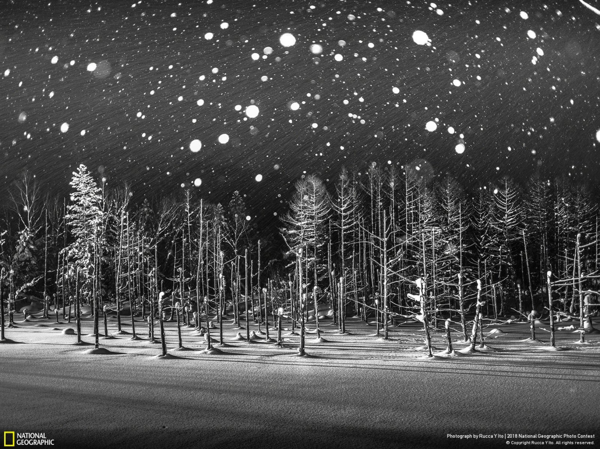 "fot. Rucca Y Ito, ""Snowflakes"""