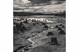 "Krajobraz: fot. Hal Gage (USA) za zdjęcie ""Stumps, Alder Lake, Nisqually River, Oregon"" (Pniaki drzew nad jeziorem Alder na rzece Nisqually, Oregon), 2019 Sony World Photography Awards"