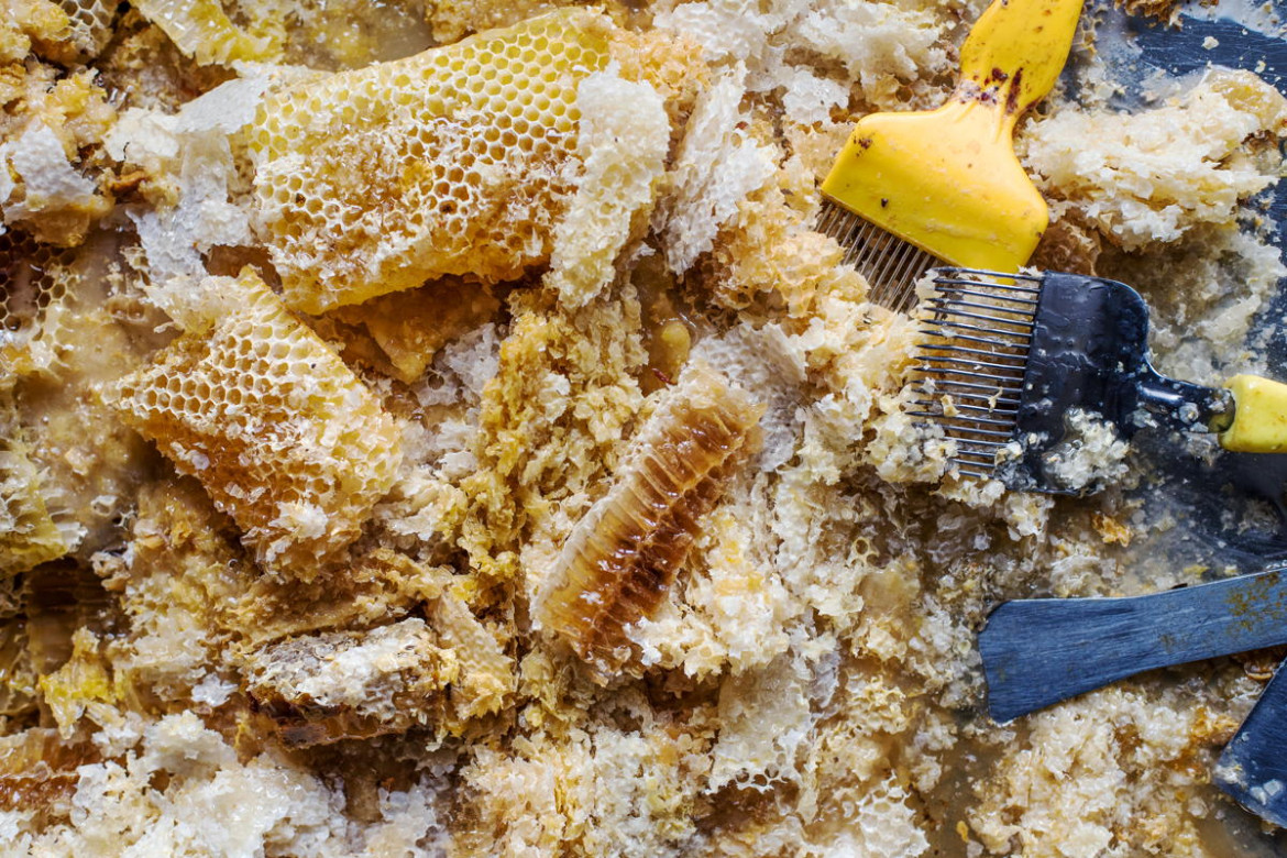 "fot. Becci Hutchings, ""Honeycomb and Wax"", 1. miejsce w sekcji Student Photographer of the Year"