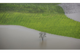 "fot. George Rose, ""Vineyard Flooding"", 1. miejsce w kategorii Errazuriz Wine Photographer of the Year - Places"
