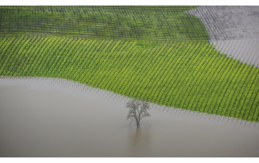 fot. George Rose, Vineyard Flooding, 1. miejsce w kategorii Errazuriz Wine Photographer of the Year - Places