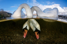 Grant Thomas - British Underwater Photographer of the Year 2018