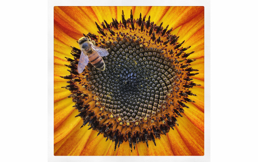 fot. Rosie Karel Dressed in Powerful Pollen, 1. miejsce w kategorii Macro & Details / Mobile Photography Awards 2018