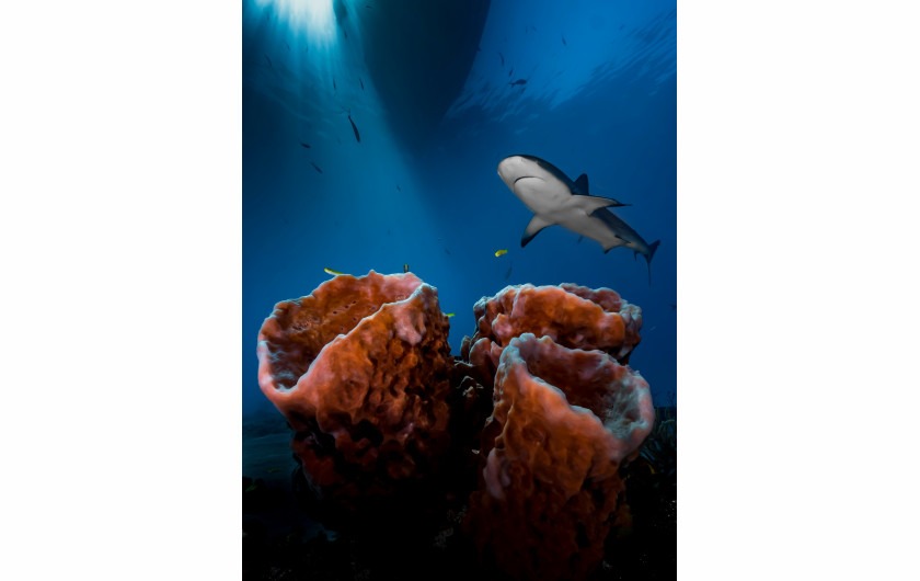 fot. Pier Mane - Up & Coming Underwater Photographer of the Year 2016