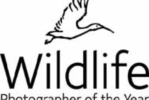 Wildlife Photographer of the Year 2004