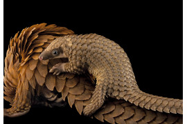 © JOEL SARTORE | www.nationalgeographic.com