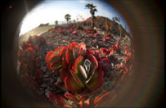 Lensbaby Fisheye i Soft Focus