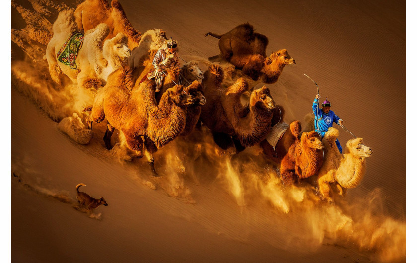 Weiguo Hu, CAMELS IN THE DESERT, II miejsce w kategorii General Color Siena International Photo Awards 2018