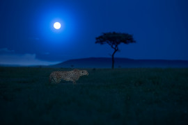 3 miejsce: Wildlife and Animals - Thomas Vijayan