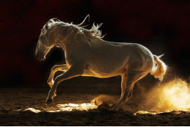 "fot. Edyta Trojanowska-Koch, z cyklu ""Horses of The Sun"", bronz w kategorii Nature / Pets 