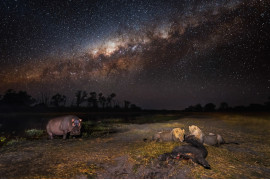"fot. Hannes Lochner, II miejsce w kategorii ""Animals in their Environment"" Siena International Photo Awards 2019"