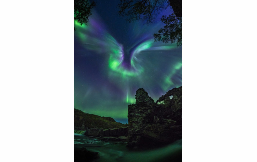 fot. Alexander Stepanenko, Aurora is a Bird / Insight Investment Astronomy Photographer of the Year 2019