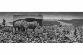 "fot. Nick Brandt, ""Wasteland with Rhinos"""