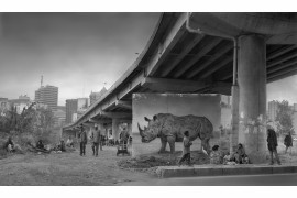 "fot. Nick Brandt, ""Underpass with Rhino"""
