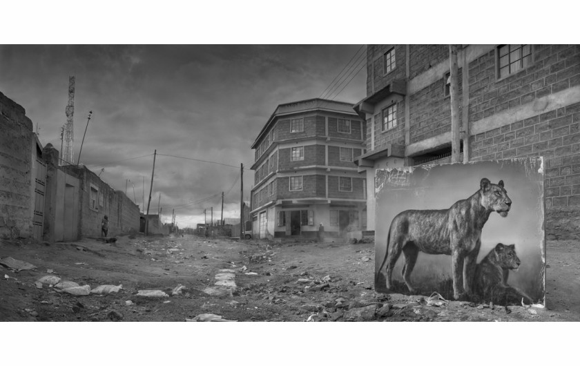 fot. Nick Brandt, Street with Lioness