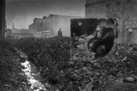 "fot. Nick Brandt, ""Alleyway with Chimpanzee"""