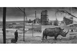 "fot. Nick Brandt, ""Factory with Rhino"""