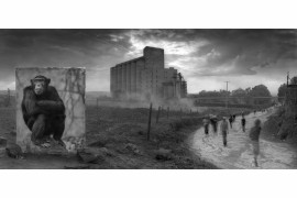 "fot. Nick Brandt, ""Factory with Chimpanzee"""