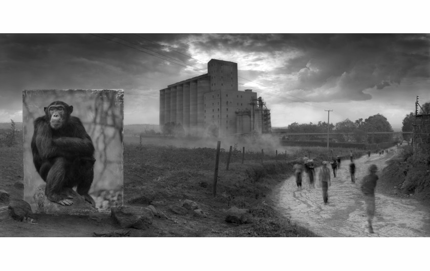 fot. Nick Brandt, Factory with Chimpanzee