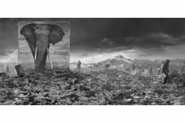 "fot. Nick Brandt, ""Wasteland with Elephant"""