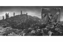 "fot. Nick Brandt, ""Wasteland with Cheetahs"""