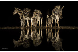 © Charl Senekal - Wildlife Photographer of the Year