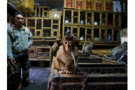 "fot. Paul Hilton, z cyklu ""Backroom business"", 1. nagroda w kategorii Wildlife Photojournalists Story Award / Wildlife Photographer pf the Year 2020"