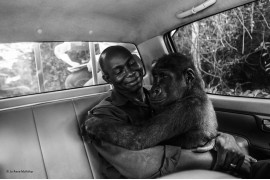 © Jo-Anne McArthur - Wildlife Photographer of the Year